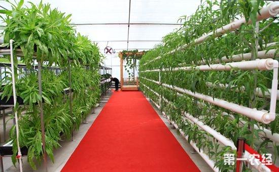 截至目前江苏省已累计确认农业科技型企业639家