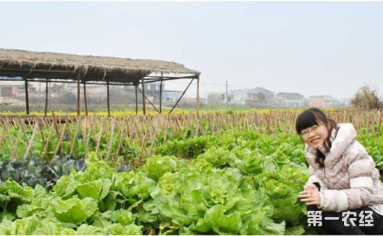 """黑龙江农民创新营销方式 将传统农业""""玩""""出新花样"""