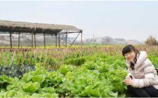 "<b>黑龙江农民创新营销方式 将传统农业""玩""出新花样</b>"