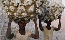 印度棉纱报价出现反弹 纱厂开始抵制棉价上涨