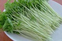 芽菜怎么进行种植?芽菜的种植技术