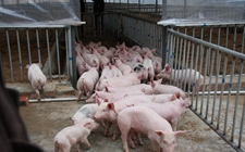 <b>李悦林:科学生态养猪携手60余户村民共同致富</b>
