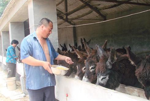 养驴大户李青山:成立养殖合作社带领村民共同致富