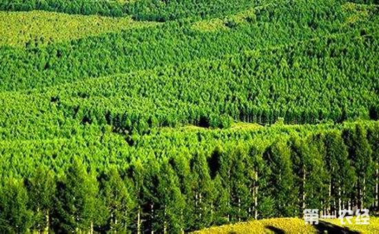 国家林业局局长张建龙:我国林业发展挑战与机遇并存