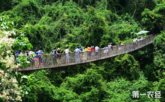 国家林业局程红:森林旅游已成为养眼、养心、养生的时尚事业