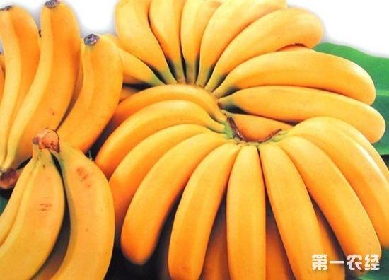 2018年1月12日全国香蕉市场价格行情