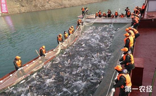 2018中国广元白龙湖亭子湖生态有机鱼开捕仪式举行