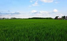 提升农民现代化水平 充分发挥农民在推动乡村振兴的主体作用