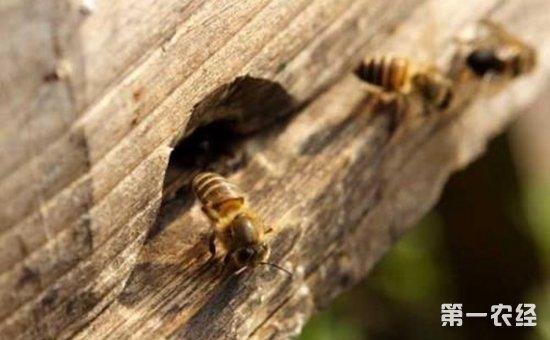 蜜蜂养殖怎么过箱?中蜂过箱的常用方法介绍!