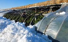 长丰县罕见风暴雪损失惨重 有关部门积极应对拾复产信心