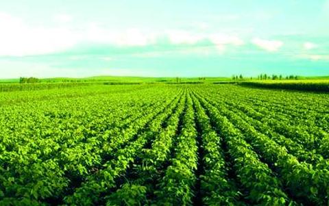 甘肃:着力打赢产业扶贫攻坚战 大力推行农业标准化