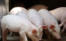 南靖一养猪村遭整治 村民生活条件得到改善