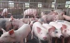 2018年1月15日生猪价格行情呈现下跌趋势