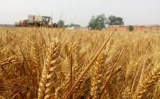 还在等什么?2018农民朋友种这五种作物来钱快有补贴!