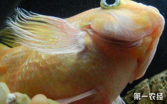 鱼类疾病如何防治?鱼类养殖常见疾病的防治方法