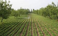 "<b>农业缺钱有这四种方法来钱!快来看看合作社如何利用土地""变现""</b>"
