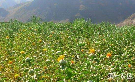 特色农业助农增收 种植养殖皆门路