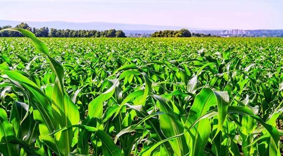 走好绿色兴农之路 推动中国特色农业绿色发展