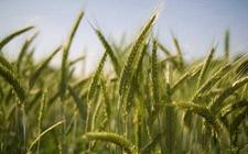 共建农产品绿色优质安全示范区 引领全国农业高质量发展