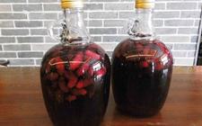 如何酿制桑葚酒?桑葚酒的制作方法