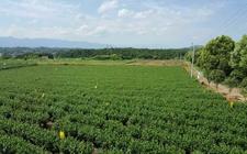 湖南拟三年建设硒科普基地122个助农增收