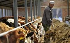 """宁夏:建立646个""""节本增效""""示范点 创新草畜产业扶贫模式"""