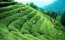 """我国各地茶风茶俗之——福建南平的""""叫茶""""习俗"""