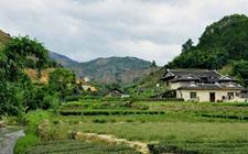 福建福安与泰宁关于茶的中秋民俗