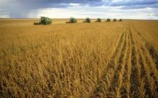 巴西未来或出现强降雨 农户玉米种植决心不变