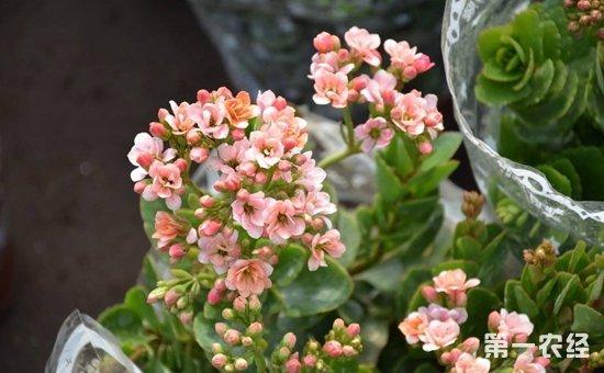 这些盆栽掐个枝条就能活!5种常见盆栽植物的扦插方法介绍