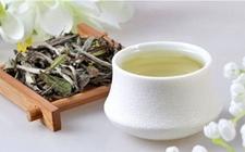 白茶的作用与功效有哪些?详解白茶的作用和功效