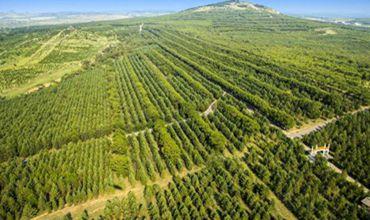 山西省2257个扶贫攻坚造林合作社带动5.4万名贫困人口增收