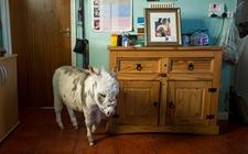 世界上最小的驴新鲜出炉!比吉尼斯世界纪录还要矮9英寸