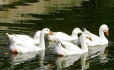 昆明寻甸县完成畜禽规模养殖场备案并统一赋码