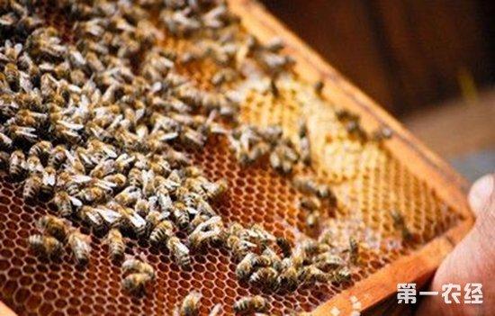 养蜂成丽水松阳低收入农户增收利器