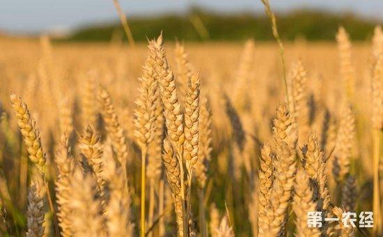 2017年粮食再获丰收  农业种植结构优化升级