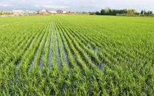 四川广元:采取多项措施保障农业生产的安全稳定