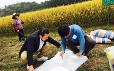 浙江省高产创建打破6项粮油亩产纪录