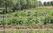 甘肃发展中药材种植产业 农民自产自销免征增值税