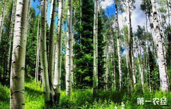 2017年衡阳市造林30.56万亩 森林覆盖率达到47.6%