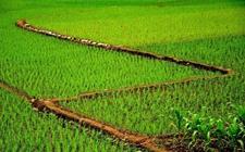 农村创业主体明显增加 多措并举支持返乡下乡人员创业