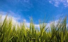 <b>甘肃:探索新时代乡村振兴道路 科技创新为农业发展提供支撑</b>