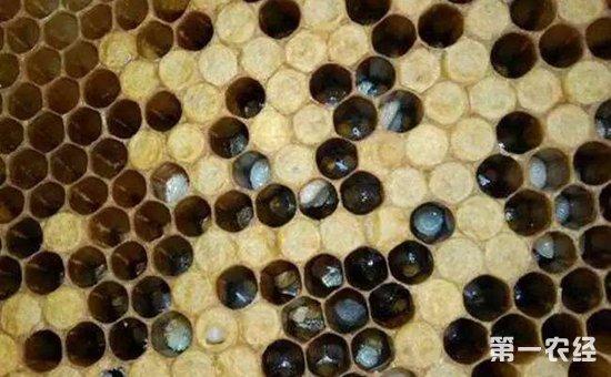 蜜蜂烂子病用什么药?蜜蜂烂子病的药剂防治方法