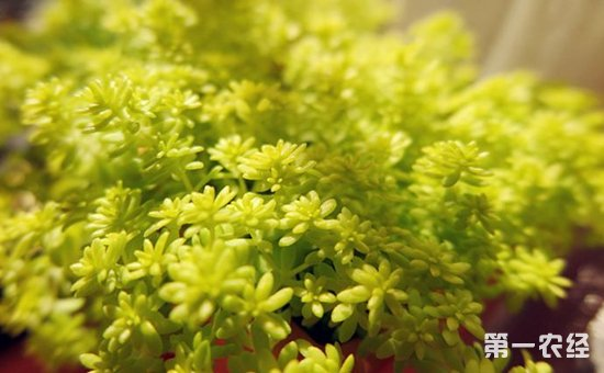 冬季盆栽怎么养护?8种常见盆栽植物的冬季养护方法