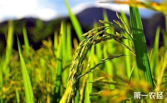 加快构建粮食安全保障体系  推动我国由粮食生产大国迈向粮食产业强国