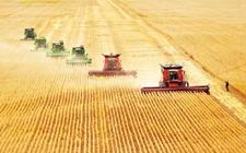 河南优质专用小麦生产取得明显成效