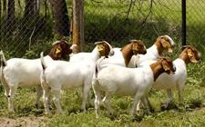 种畜禽养殖经营必须持有许可证