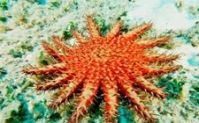 大堡礁日益被侵蚀 澳大利亚动用超3亿元人民币保育