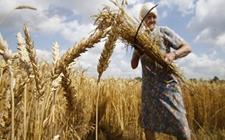 俄卢比上涨 出口小麦价格同步提高