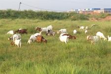 河南省2017年畜牧业目标任务圆满完成